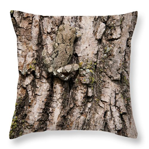 Tree Frog Throw Pillow featuring the photograph Gray Tree Frog by Stephen J Krasemann