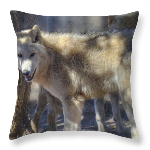 Wolf Throw Pillow featuring the photograph Gray Wolf by Dianne Phelps