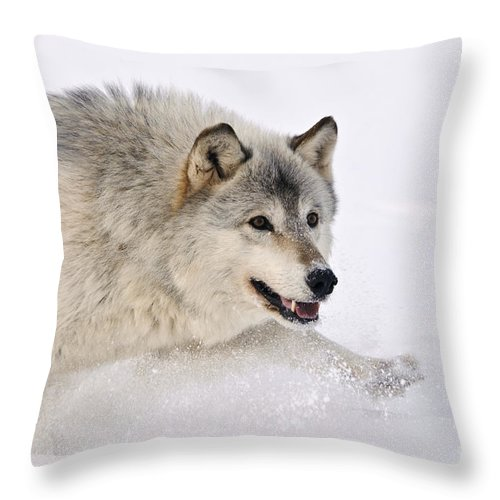 Canis Lupus Throw Pillow featuring the photograph Gray Wolf by John Shaw