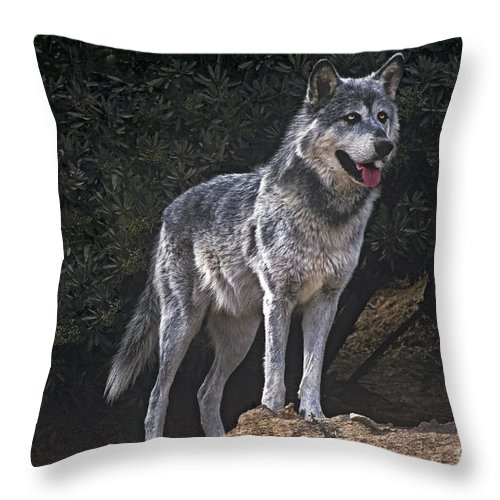 Gray Wolf Throw Pillow featuring the photograph Gray Wolf On Hillside Endangered Species Wildlife Rescue by Dave Welling