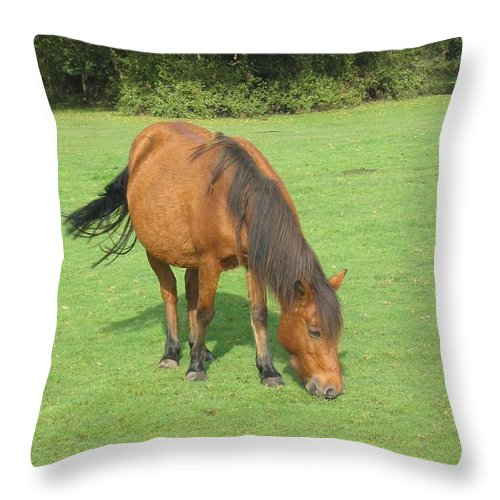 Pony Throw Pillow featuring the photograph Grazing Chestnut Pony by DejaVu Designs