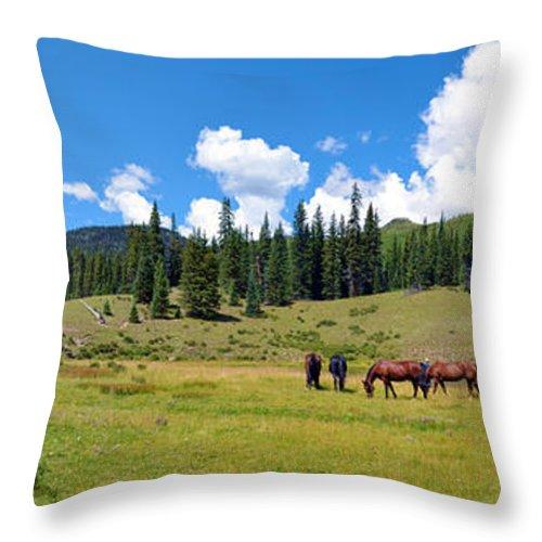 Grazing Throw Pillow featuring the photograph Grazing by Gary Mosman