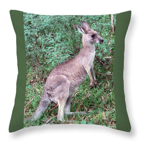 Grazing In The Grass Throw Pillow featuring the photograph Grazing In The Grass by Ellen Henneke