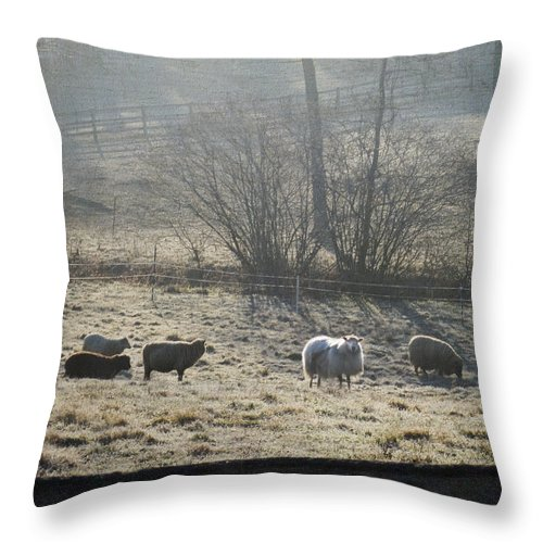 Farm Throw Pillow featuring the photograph Grazing The Frost by Trish Tritz