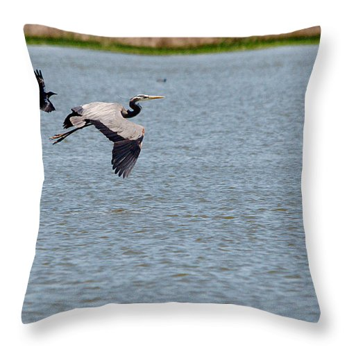 Roy Williams Throw Pillow featuring the photograph Great Blue Chased By A Grackle by Roy Williams