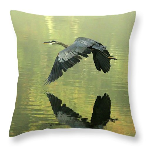 Blue Throw Pillow featuring the photograph Great Blue Fly-by by Douglas Stucky