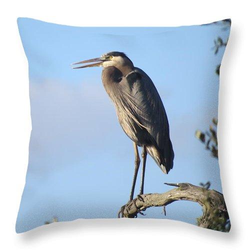 Birds. Birds Of Florida Throw Pillow featuring the photograph Great Blue Heron by Ellen Meakin