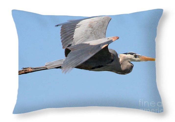 Great Blue Heron Throw Pillow featuring the photograph Great Blue Heron Flying by Bob and Jan Shriner