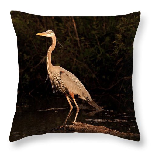 Ardea Throw Pillow featuring the photograph Great Blue Heron by Jack R Perry