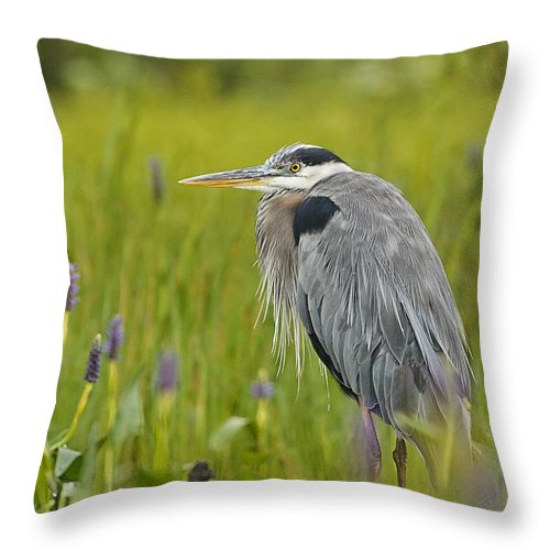 Great Blue Heron Throw Pillow featuring the photograph Great Blue Heron by John Vose