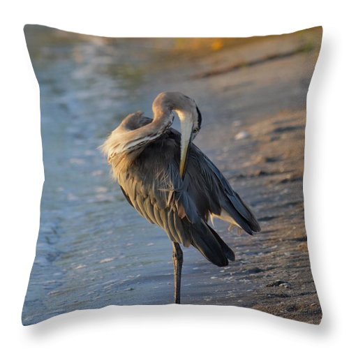 Great Blue Throw Pillow featuring the photograph Great Blue Heron Preening On The Beach by Patricia Twardzik