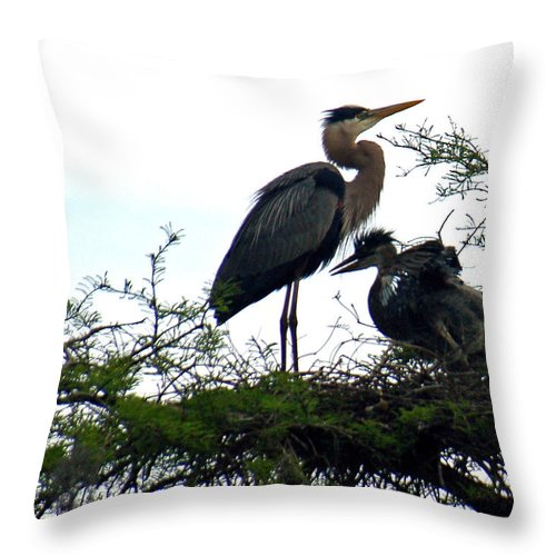 Blue Heron Throw Pillow featuring the photograph Great Blue Heron With Fledglings II by Suzanne Gaff