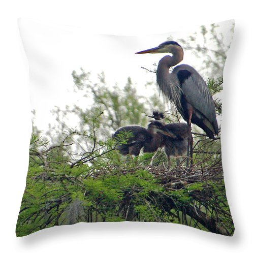Great Blue Heron Throw Pillow featuring the photograph Great Blue Heron With Fledglings by Suzanne Gaff
