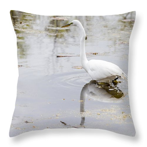 Alba Throw Pillow featuring the photograph Great Egret by Jack R Perry