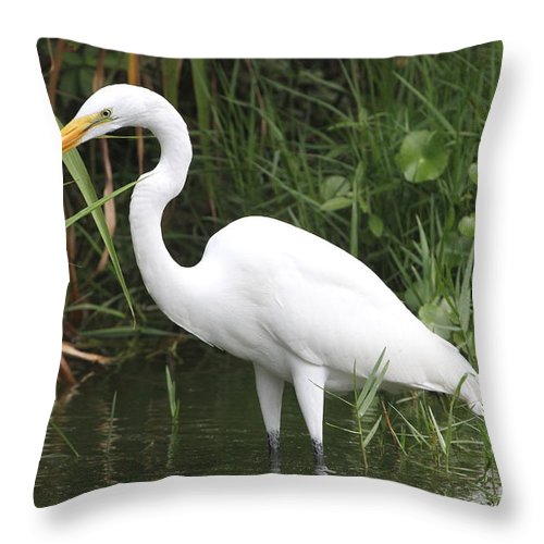 Egret Throw Pillow featuring the photograph Great Egret by Ken Keener