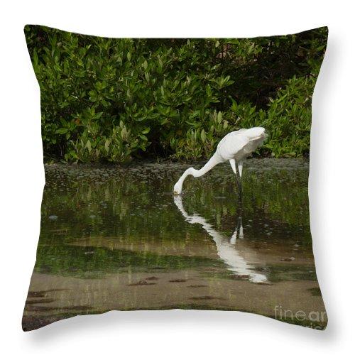 Heron Throw Pillow featuring the photograph Great Egret by Luis Alvarenga