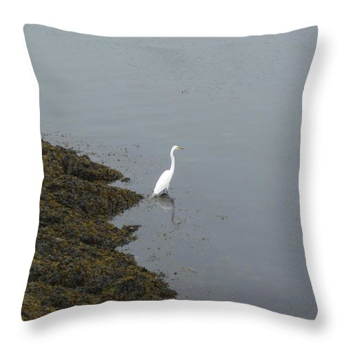 Great Egret.bird Throw Pillow featuring the photograph Great Egret by Robert Nickologianis
