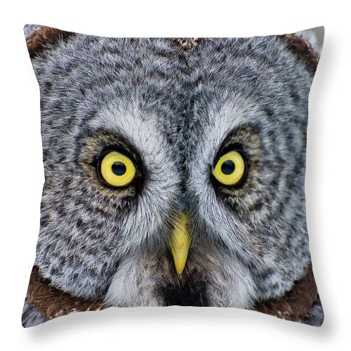 Animal Themes Throw Pillow featuring the photograph Great Gray Owl by Copyright Michael Cummings