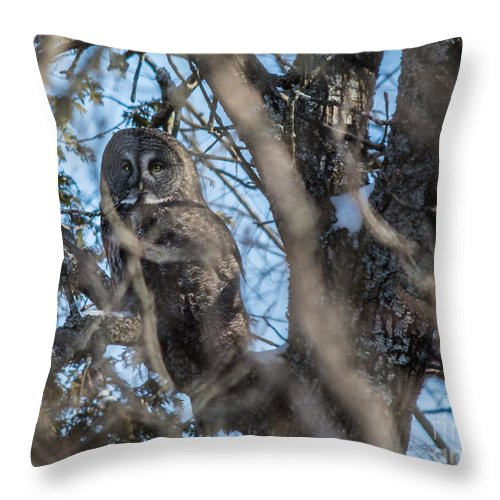 Blue Throw Pillow featuring the photograph Great Grey In The Woods by Cheryl Baxter