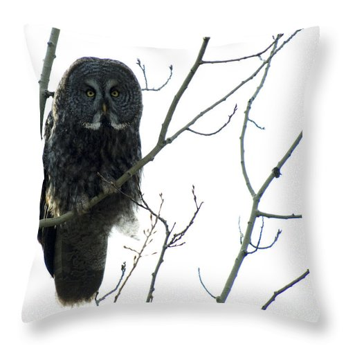 Bird Throw Pillow featuring the photograph Great Grey Owl On The Lookout by Bob Christopher