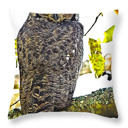 Great Horned Owl Throw Pillow featuring the photograph Great Horned Owl by Rob Mclean