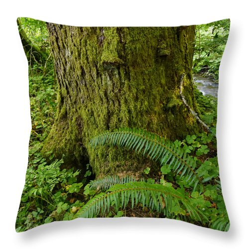 Tree Trunk Throw Pillow featuring the photograph Great Support by Terry Dorvinen