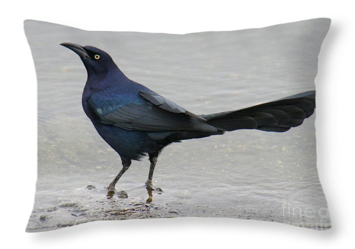 Great-tailed Grackle Throw Pillow featuring the photograph Great-tailed Grackle Wading by Bob and Jan Shriner