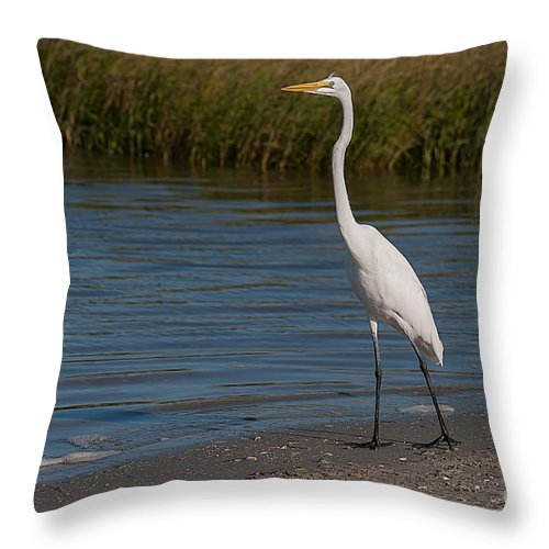 Great Throw Pillow featuring the photograph Great White 184 by Photos By Cassandra
