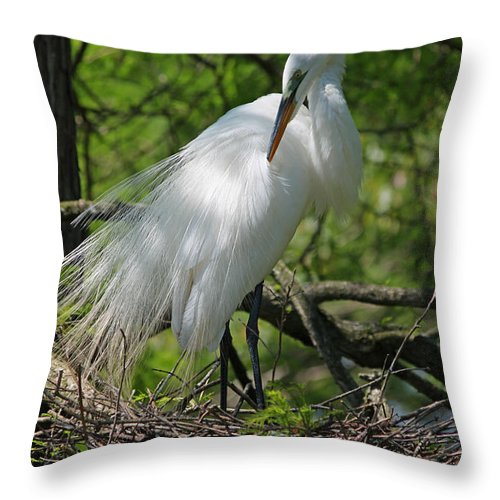 Photograph Throw Pillow featuring the photograph Great White Egret Primping by Suzanne Gaff