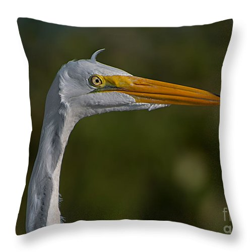 Great Throw Pillow featuring the photograph Great White Portrait 2 by Photos By Cassandra