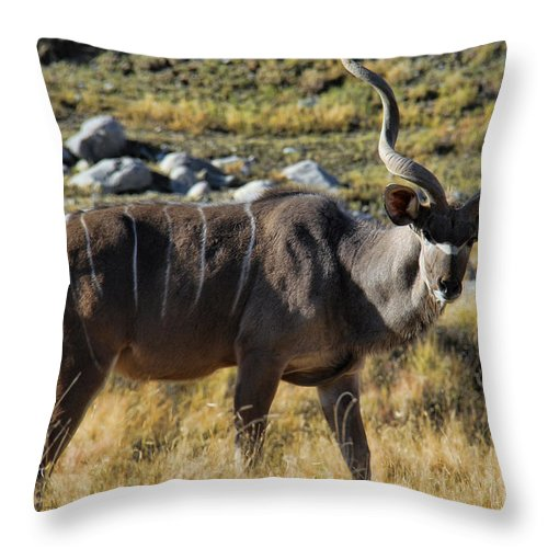 Greater Kudu Grazing Throw Pillow featuring the photograph Greater Kudu Grazing by Mariola Bitner