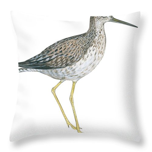 No People; Square Image; Side View; Full Length; White Background; One Animal; Wildlife; Illustration And Painting; Zoology; Close Up; Bird; Feather; Beak; Animal Pattern; Greater Yellowlegs; Tringa Melanoleuca; Wing Throw Pillow featuring the drawing Greater Yellowlegs by Anonymous