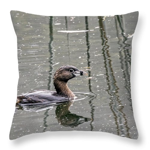 Bird Throw Pillow featuring the photograph Grebe In The Reeds by Kate Brown