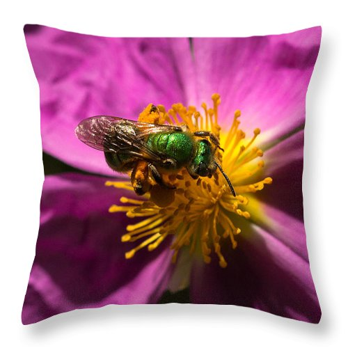 Green Bee Throw Pillow featuring the photograph Green Bee Feeding On Rock Rose by Kathleen Bishop