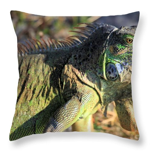 Iguana Throw Pillow featuring the photograph Green Day by Adam Jewell