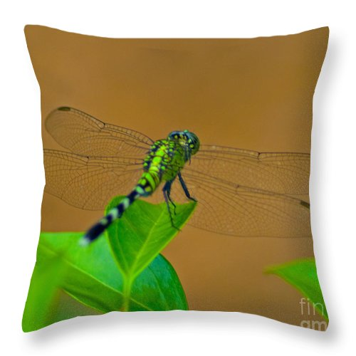 Green Throw Pillow featuring the photograph Green Dragonfly by Stephen Whalen