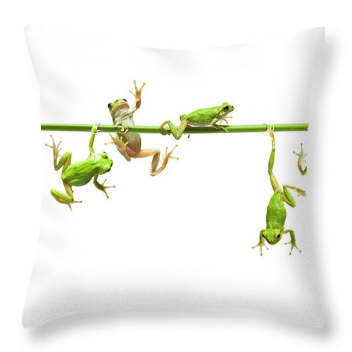 Hanging Throw Pillow featuring the photograph Green Flogs Each Other Freely On Stem by Yuji Sakai
