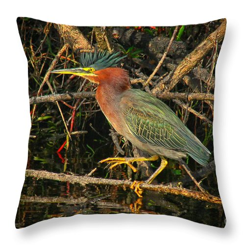 Green Heron Throw Pillow featuring the photograph Green Heron Basking In Sunlight by Barbara Bowen