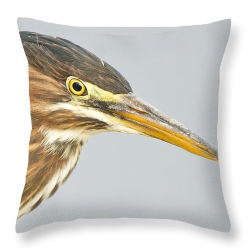 Green Heron Throw Pillow featuring the photograph Green Heron Close-up by John Vose