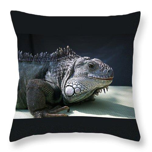Green Iguana Throw Pillow featuring the photograph Green Iguana 1 by Ellen Henneke