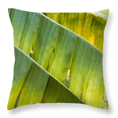 Heiko Throw Pillow featuring the photograph Green Leaves Series 14 by Heiko Koehrer-Wagner