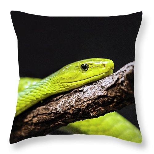 Long Throw Pillow featuring the photograph Green Mamba - Mamba Verte - Grüne Mamba by A.töfke Cologne Germay