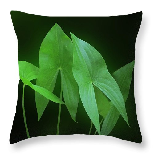 Washington State Throw Pillow featuring the photograph Green Octave by I'ina Van Lawick