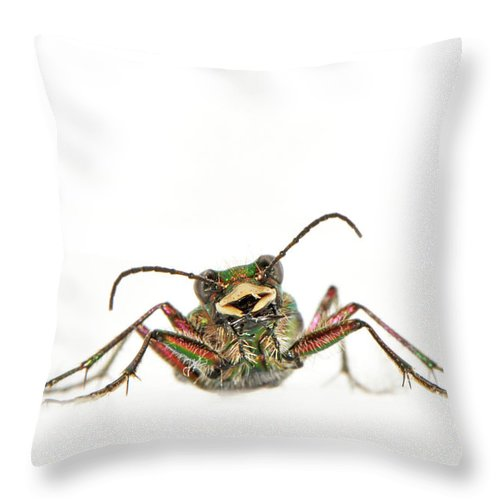 White Background Throw Pillow featuring the photograph Green Tiger Beetle by Robert Trevis-smith
