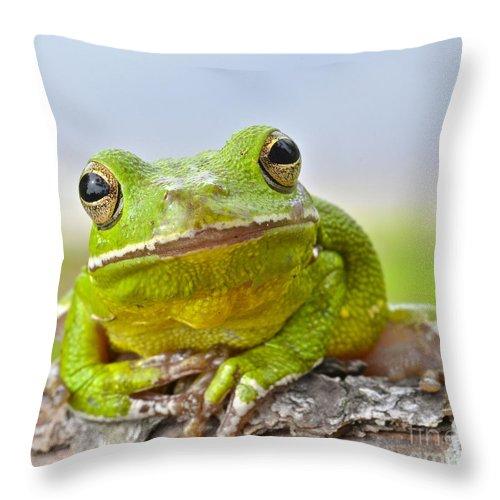Green Treefrog Throw Pillow featuring the photograph Green Treefrog by John Serrao