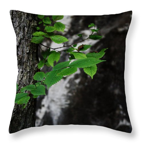 Green Throw Pillow featuring the photograph Green by Valerie Loop