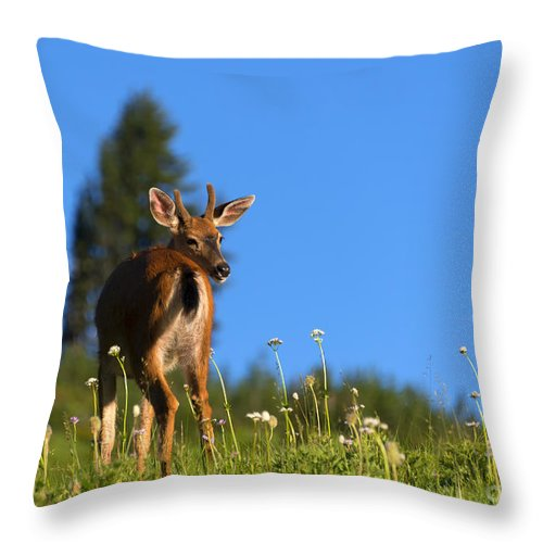 Buck Throw Pillow featuring the photograph Greener Fields by Mike Dawson