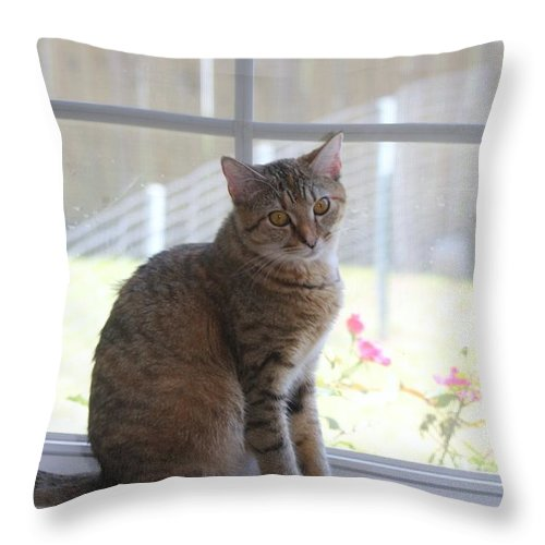 Cat Throw Pillow featuring the photograph Gretchen Sitting In The Window by Michelle Powell