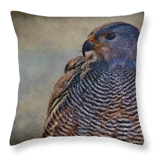 Grey Hawk Throw Pillow featuring the photograph Grey Hawk by Barbara Manis