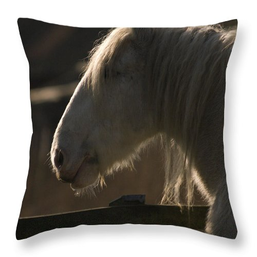 Horse Throw Pillow featuring the photograph Grey Shire Horse by Angel Ciesniarska